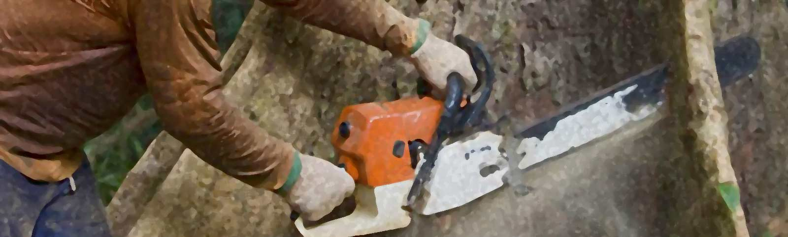 Before You Hire a Tree Surgeon, Here is a Primer on Tree Surgery