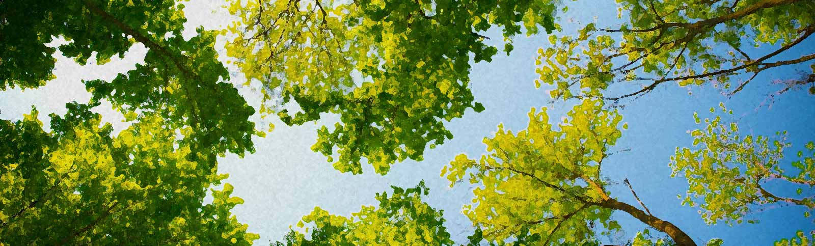 Tree Shaping to Improve Your Landscape
