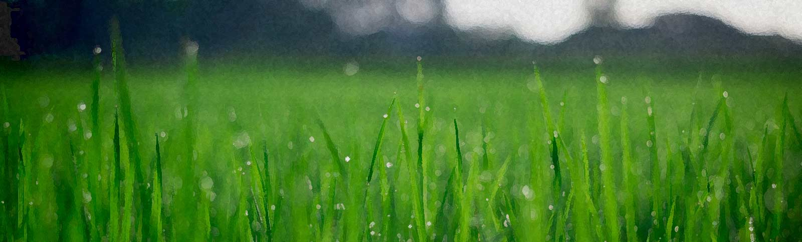 Top Landscape Tip: Hiring Landscapers to Install Your New Lawn and Turf